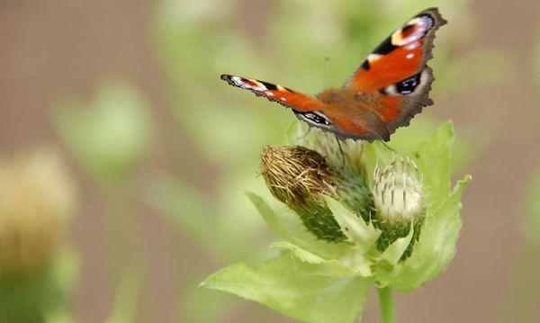 vhs ökostation Nachhaltig leben Natur und Umwelt
